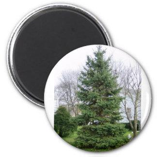 Pinetree Magnet