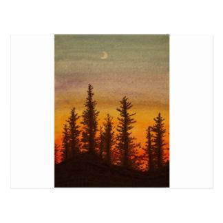 Pinetree Sunset Postcard