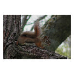Piney Reclining Posters