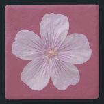 """Pineywoods Geranium #1 Stone Coaster<br><div class=""""desc"""">My painting of a lilac-colored version of the pineywoods geranium blossom,  a perennial herb native to the western United States and northern Mexico. Its US distribution includes Arizona,  Colorado,  Nevada,  New Mexico,  Texas,  Utah,  and Wyoming.</div>"""