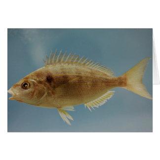 Pinfish Card