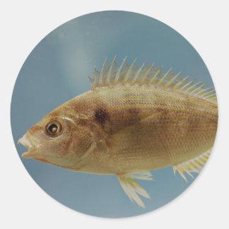 Pinfish Classic Round Sticker