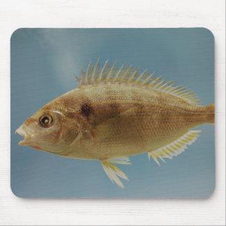 Pinfish Mouse Pad