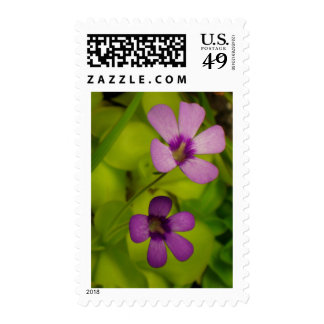 Pinguicula flower postage stamp