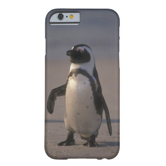 Pinguim africano (demersus do Spheniscus) ou Jacka Barely There iPhone 6 Case