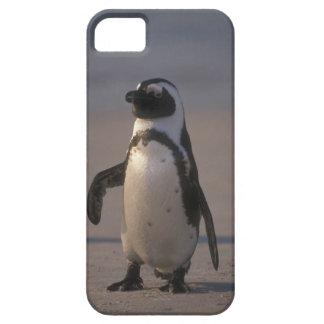 Pinguim africano (demersus do Spheniscus) ou Jacka iPhone SE/5/5s Case
