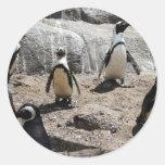 pingüino, 2 pegatinas redondas