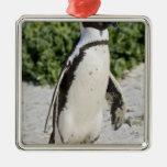 Pingüino africano, conocido antes como Jackass Adorno Navideño Cuadrado De Metal