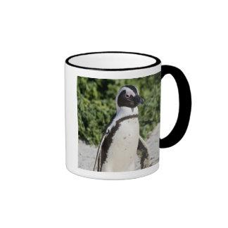 Pingüino africano, conocido antes como Jackass Taza De Dos Colores