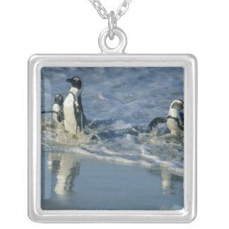Pingüino africano, (demersus del Spheniscus), 2 qu Colgantes Personalizados