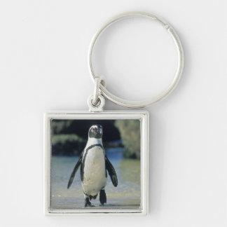 Pingüino africano ((demersus del Spheniscus) el ve Llaveros Personalizados