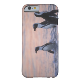 Pingüino africano (demersus del Spheniscus) o Jack Barely There iPhone 6 Case