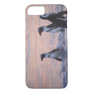 Pingüino africano (demersus del Spheniscus) o Jack iPhone 7 Case