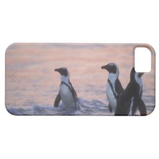 Pingüino africano (demersus del Spheniscus) o Jack iPhone SE/5/5s Case