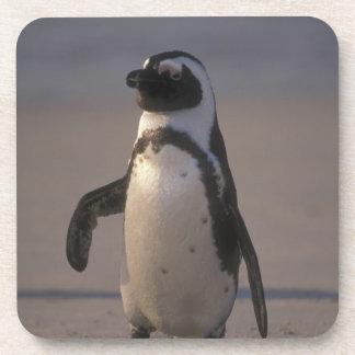 Pingüino africano (demersus del Spheniscus) o Jack Posavasos De Bebidas