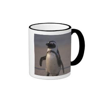 Pingüino africano (demersus del Spheniscus) o Taza De Dos Colores