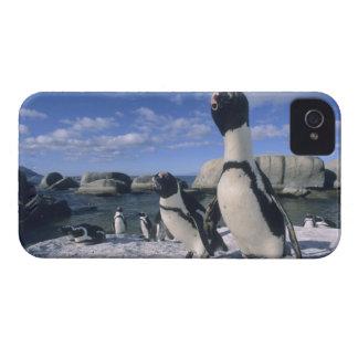 Pingüino africano ((demersus del Spheniscus) salva Case-Mate iPhone 4 Funda