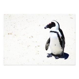 Pingüino africano en la playa de los cantos rodado anuncio personalizado