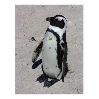 Pingüino africano - postal