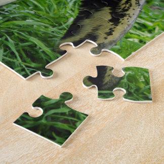 Pingüino africano puzzle