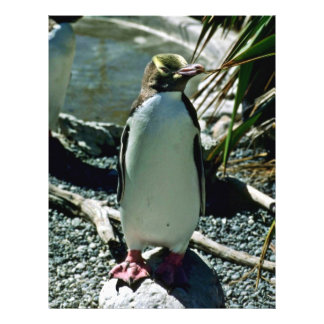 pingüino Amarillo-observado Tarjetones