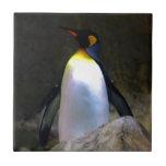 Pingüino Azulejo