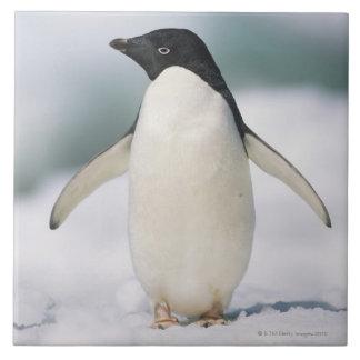 Pingüino de Adelie, primer Azulejo Cuadrado Grande