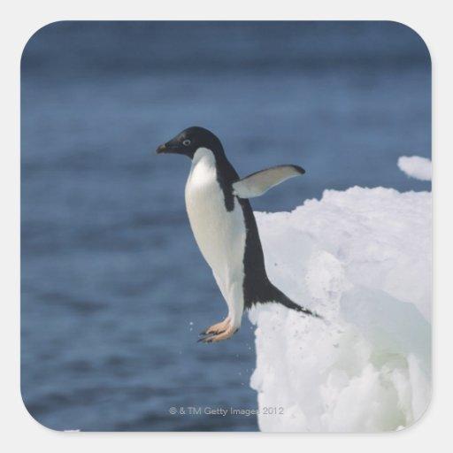 Pingüino de Adelie que salta del iceberg Calcomania Cuadradas Personalizadas