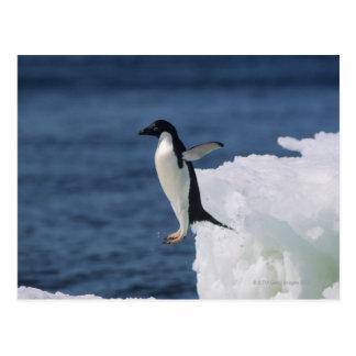 Pingüino de Adelie que salta del iceberg Postales