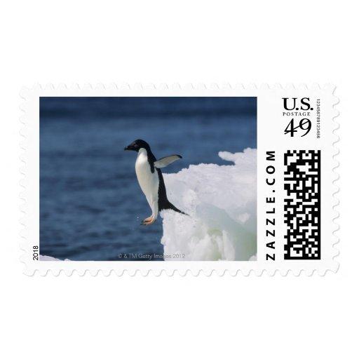 Pingüino de Adelie que salta del iceberg Sello