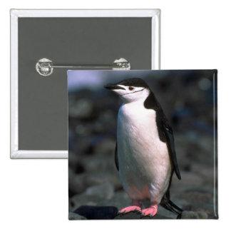 Pingüino de Chinstrap