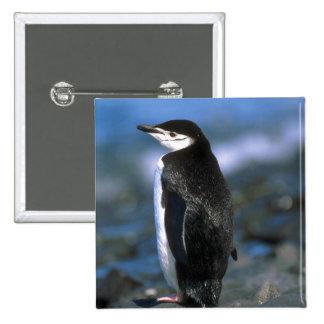 Pingüino de Chinstrap Pin
