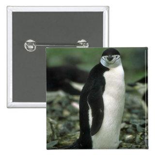 Pingüino de Chinstrap Pins