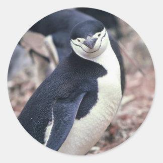 Pingüino de Chinstrap con el bebé Pegatina Redonda
