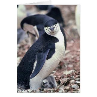Pingüino de Chinstrap con el bebé Tarjeta De Felicitación