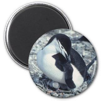Pingüino de Chinstrap Imán Redondo 5 Cm