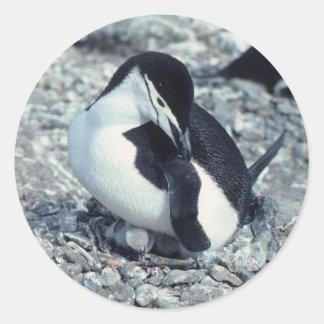 Pingüino de Chinstrap Pegatina Redonda