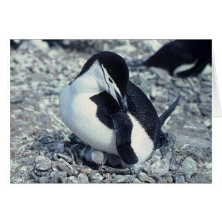 Pingüino de Chinstrap Tarjeta De Felicitación