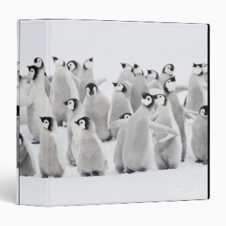 "Pingüino de emperador carpeta 1 1/2"""