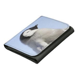 Pingüino de emperador del bebé isla de la colina