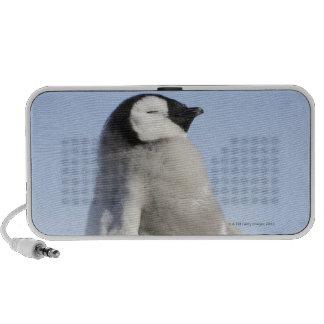 Pingüino de emperador del bebé, isla de la colina  altavoz de viajar