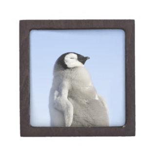 Pingüino de emperador del bebé isla de la colina cajas de regalo de calidad