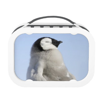 Pingüino de emperador del bebé, isla de la colina