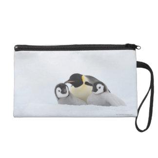Pingüino de emperador (forsteri del Aptenodytes) 2