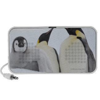 Pingüino de emperador (forsteri del Aptenodytes) Altavoces De Viaje