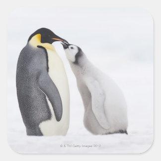 Pingüino de emperador (forsteri) del Aptenodytes, Calcomanías Cuadradas Personalizadas