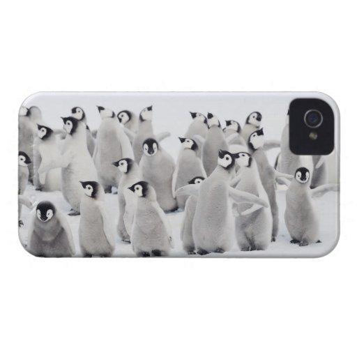 Pingüino de emperador Case-Mate iPhone 4 coberturas