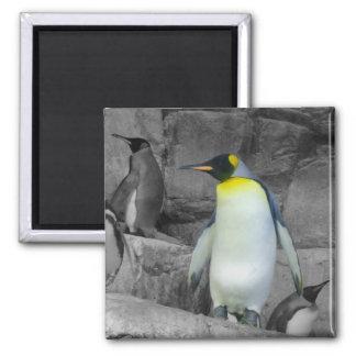 Pingüino de emperador imán cuadrado