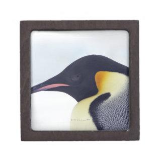 Pingüino de emperador isla de la colina de la nie caja de regalo de calidad