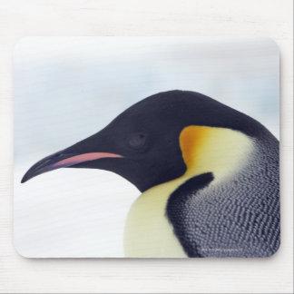 Pingüino de emperador, isla de la colina de la nie tapete de ratones